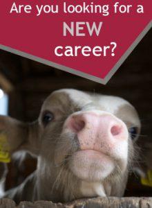 Careers advert